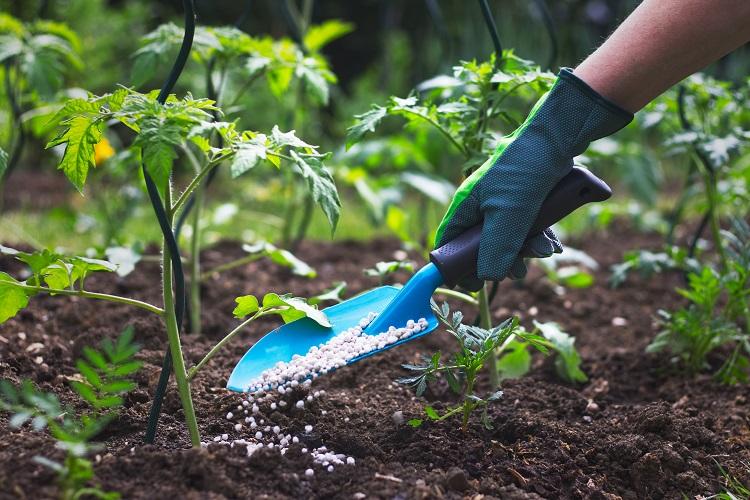 施肥|お庭のメンテナンス|千葉